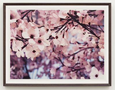 Thomas Demand, 'Blossom VI', 2015