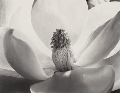 Imogen Cunningham, 'Magnolia Blossom', 1925-printed later