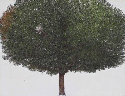 Sarah Myers, 'Linden Tree', 2012