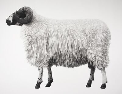 Jonathan Delafield Cook, 'Rough Fell Sheep', 2013