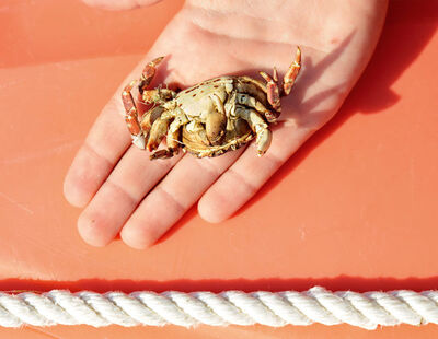 Roe Ethridge, 'Auggie with Dead Crab', 2015