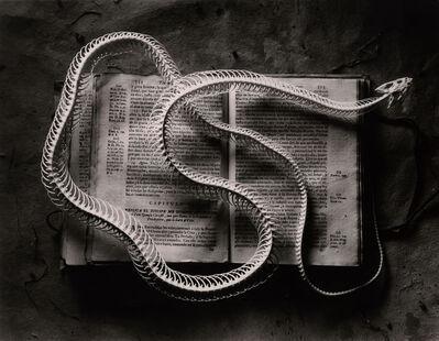 Sean Kernan, 'Snake Skeleton On Book', 1996