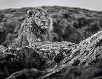 David Yarrow, 'Serengeti', ca. 2016