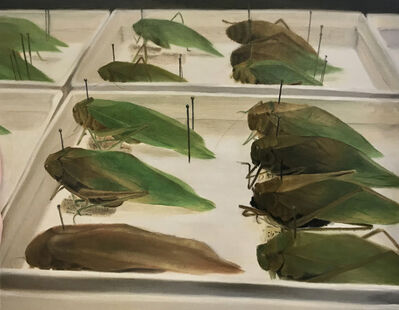 Marc Dennis, 'Study of Katydids', 2010