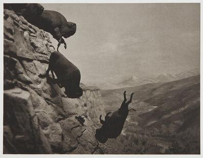 David Wojnarowicz, 'Untitled (Buffaloes)', 1988/1994
