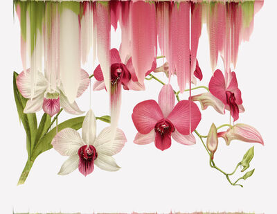 Andrea Wolf, 'Dendrobium Bigibbum var Phalaenopsis, var. 033', 2020