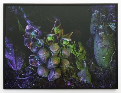 Richard Mosse, 'Acineta Superba I', 2019