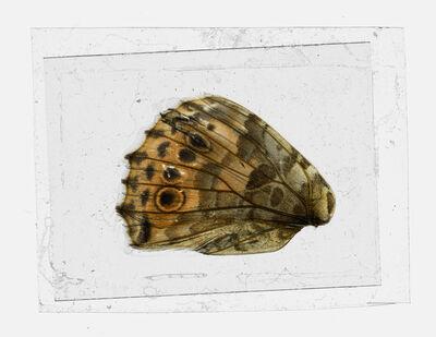 Brigitte Lustenberger, 'Bugs Unknown VI', 2015