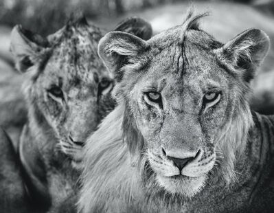 David Yarrow, 'The Boys Are Back in Town', 2019