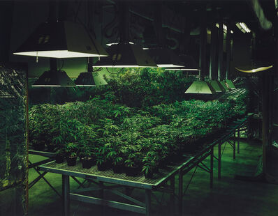 Taryn Simon, 'Research Marijuana Crop Grow Room, National Center for Natural Products Research, Oxford, Mississippi from An American Index of the Hidden and Unfamiliar', 2005/2007