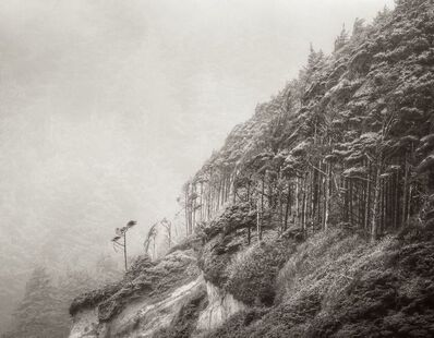 Jeffrey Conley, 'Windswept Trees', 2011