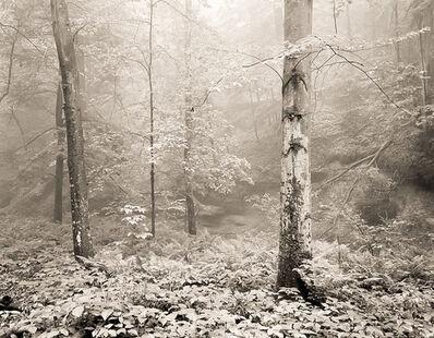 Frank Hunter, 'Beech Tree, Cedar Falls (#276)'