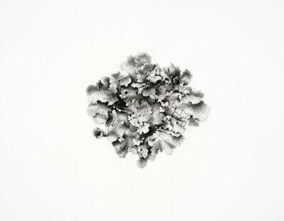 Jonathan Delafield Cook, ' Pearly Lichen   '