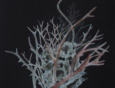 Resa Blatman, 'Small Bleached Coral 2', 2017