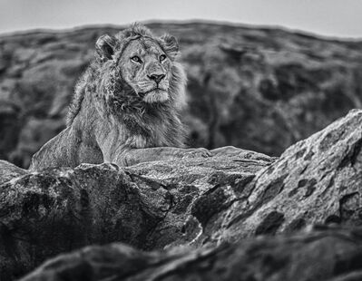 David Yarrow, 'Serengeti', 2019