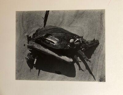 Cole Weston, 'Dead Bird #2, Point Lobos', 1-47  as written on the back