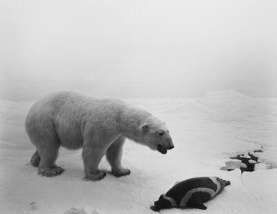Hiroshi Sugimoto, 'Polar Bear', 1976