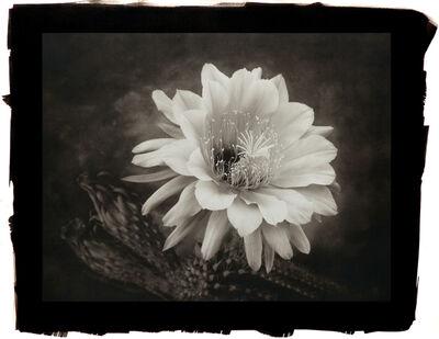 Cy DeCosse, 'Hedgehog Cactus'