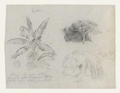 Frederic Edwin Church, 'Botanical Sketches, South America', 1853