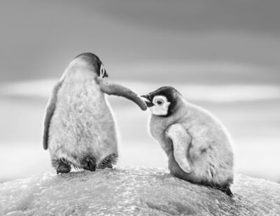 David Yarrow, 'Helping Hand'
