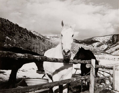 Andy Warhol, 'Andy Warhol, Photograph of Horses in Aspen, 1980s', 1980s