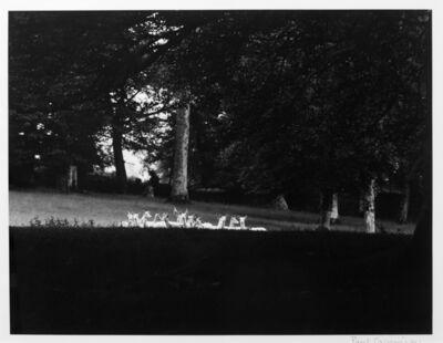 Paul Caponigro, 'Standing White Deer, Wicklow, Ireland', 1967
