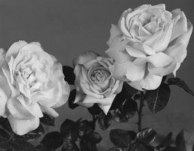 Sarah Conaway, 'Roses', 2010