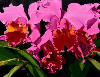 Suzy Smith, 'Pink Cattleya Orchids'