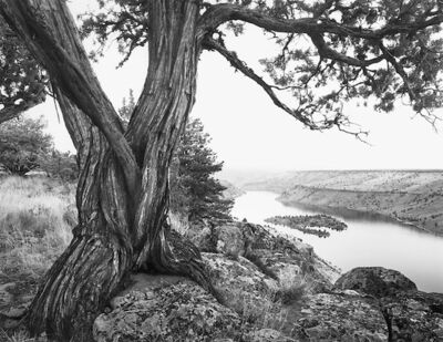 Chip Hooper, 'Juniper Tree, Lake Billy Chinook', 1994
