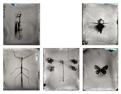Patricia Lagarde, 'Atlas entomológico', 2015