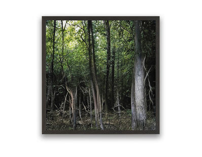 Andreas Greiner, 'Lost in The Woods_0001', 2020