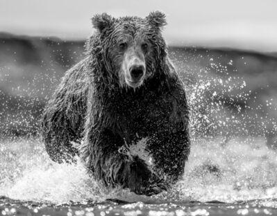 David Yarrow, 'Happy Bear', 2019