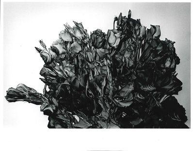 Daido Moriyama, 'Turkish Bellflower, Shibuya-ku, Tokyo', 1990