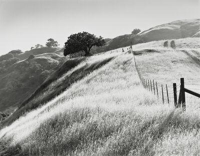 Robert Taylor, 'Hillside and Buckeye Tree in Morning Light', 1983