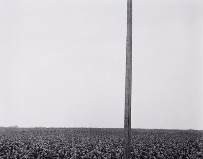 Harry Callahan, 'Pole in Corn Field', 1953