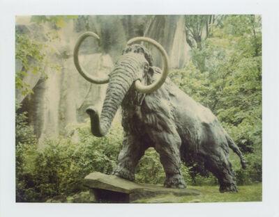 Stefanie Schneider, 'Mammoth - Jardin du Plantes (Paris)', 1995