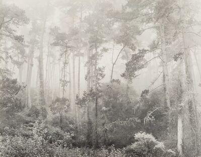 Robert Werling, 'Forest in Fog'