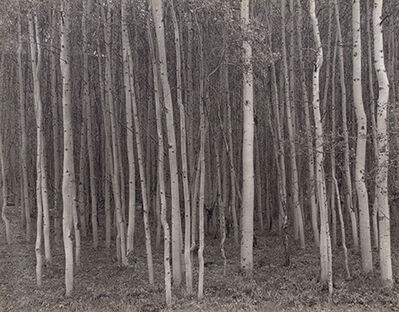 George Tice, 'Aspen Grove, Aspen, CO', 1969