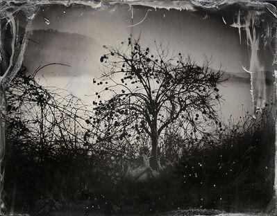 Fiona Annis, 'La Survivance des lucioles', 2018