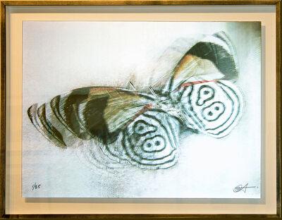Ann Weiner, 'La Mariposa', 2005