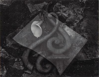 Edward Weston, 'Glass and Lily', Neg. date: 1939 / Print date: Later