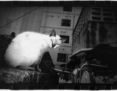 Anders Petersen, 'Okinawa, Japan (cat)', 2000