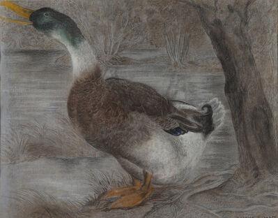 Camille Roche, 'Duck'