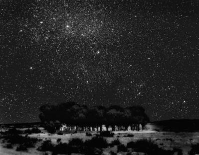 Neil Folberg, 'Starry Grove', 1999