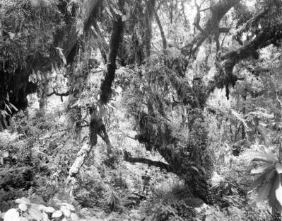 Garth Meyer, 'Border Between Rwanda Virunga National Park & Democratic Republic of the Congo Volcanoes National Park, 1.2859° S , 29.3159° E', 2019
