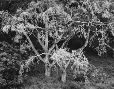 Chip Hooper, 'Twin Oaks', 2000