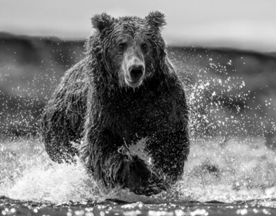 David Yarrow, 'The Happy Bear', 2017