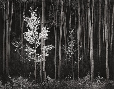 Ansel Adams, 'Aspens, Northern NM, 1958', 1958