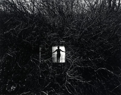 Harry Callahan, 'Eleanor', 1951