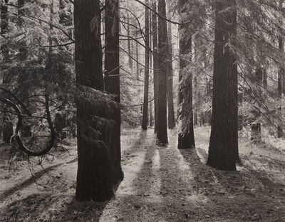 Ansel Adams, 'Forest Floor, Yosemite Valley', 1950